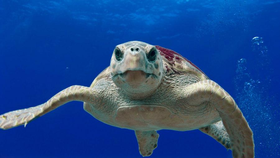 Visita all ospedale delle tartarughe di riccione for Tartarughe grandi